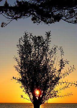 Baum im Morgenlicht von Inge Heathfield