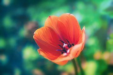 Die fröhliche Frühlings Tulpe Tulip von Jakob Baranowski - Off World Jack