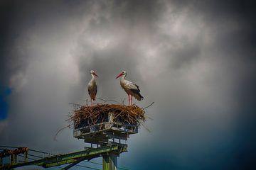 Störche auf Nest von FotoGraaG Hanneke