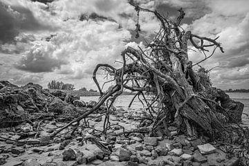 Boom rivierstrand de Lek van Eugene Winthagen