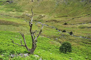 Deux arbres sur Frans Blok