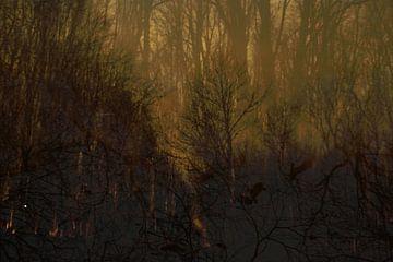 Dromen over het bos van Vette Vintage