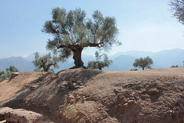 Olivenbaum in Sparta von Erika Zollner