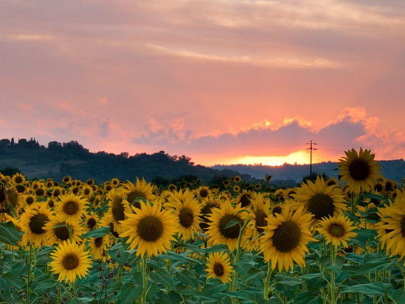 Sunflowers sunset van Judith Borremans