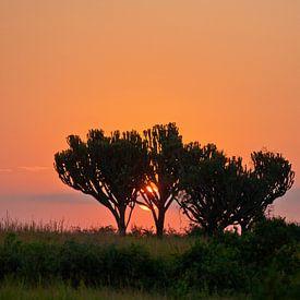 Oranje zonsopkomst in Afrika van Jim van Iterson