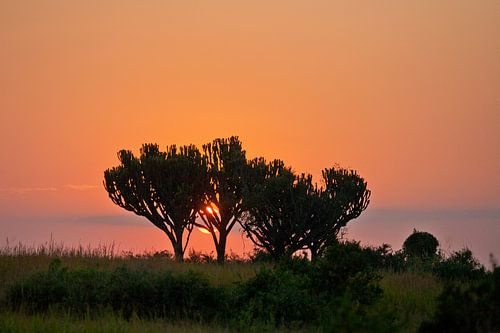 Oranje zonsopkomst in Afrika van