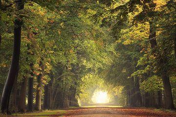Un bel automne doré sur Roelie Steinmann