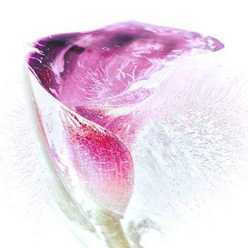 La calla van Fotografie & Digital Art von Margit Lisa Roeder