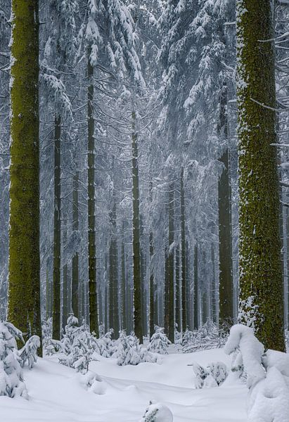 Winter comeback van Wim van D