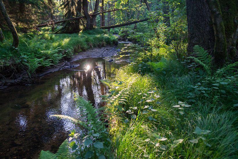 Lichtstimmung am Flussufer von Adriana Mueller