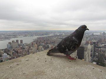 Pigeon in New York van