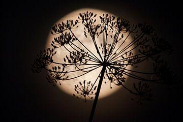 Full Moon fever #2 van Dennis Claessens