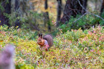 Eichhörnchen in Herbstfarben von Merijn Loch