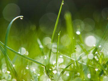 Dauw Op Gras van Martijn Wit