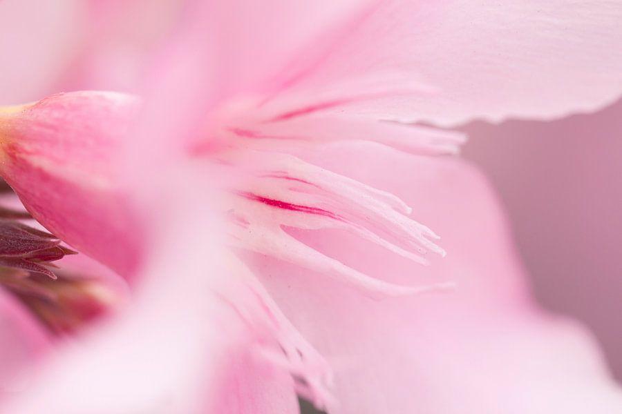 Roze bloem van Kimberly van Aalten