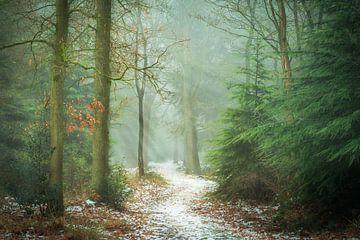 Through the Pines von Martijn van Geloof