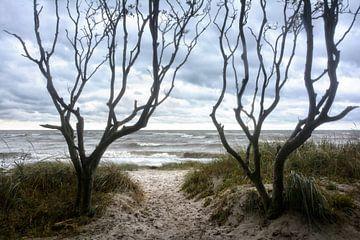 Insel Poel Strandzugang von Joachim G. Pinkawa