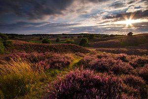 Een mooi paars landschap tijdens de zonsondergang van