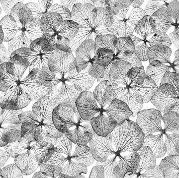 Hortensienblätter in Schwarz und Weiß von Klaartje Majoor