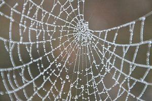 spinnenweb in ochtendmist