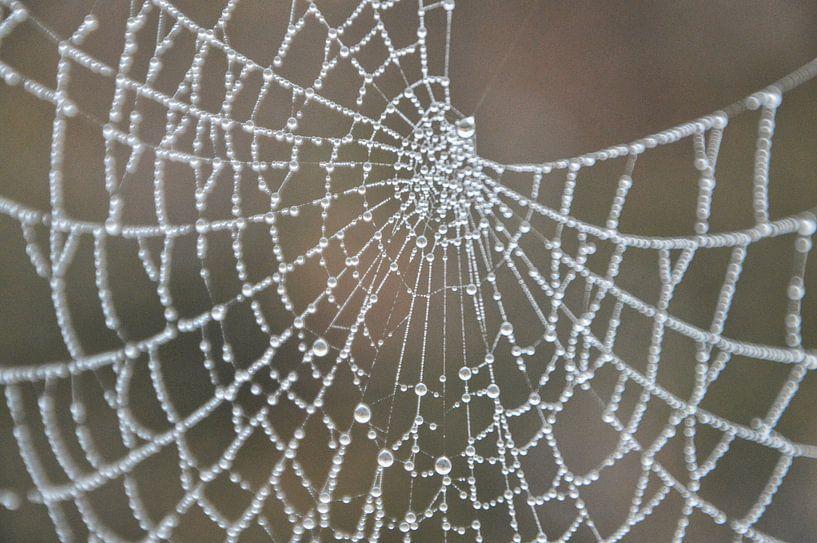 spinnenweb in ochtendmist von eric brouwer