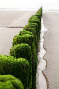 Groene golfbrekers van