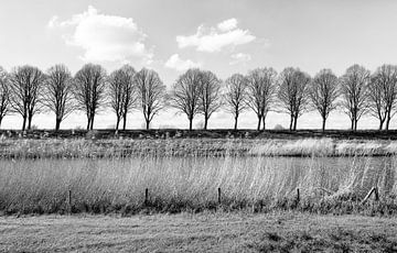 Monochrome foto van een rij kale bomen achter een dijk van Ruud Morijn