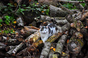 De kat van Alia Maximus