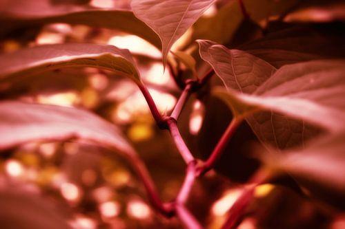 Naturpfad - Herbstrot