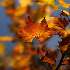 The Autumn Leave van Cornelis (Cees) Cornelissen