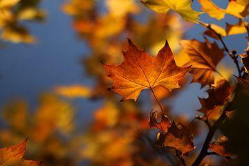 The Autumn Leave von Cornelis (Cees) Cornelissen