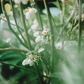 Witte besjes in het groen van Daphne Groeneveld