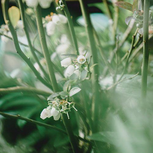 Witte besjes in het groen
