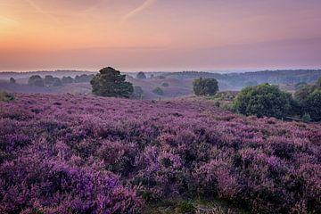 Purple Landscape von Jimmy Sorber