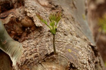 'Pflanze vom Baum'. von Capture the Moment 010