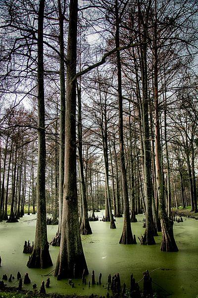 Cypress Swamp, USA van Esther Hereijgers