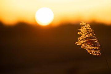 First light. van Corné Ouwehand