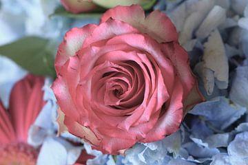Rosenblüte von Anette Jäger