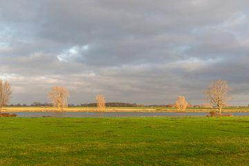 Aan de waterkant de zon schijnt op de kale bomen van Lieke van Grinsven van Aarle