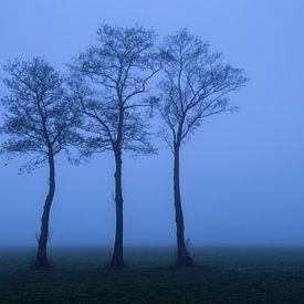 Dichte mist in de polder van Rick Kloekke