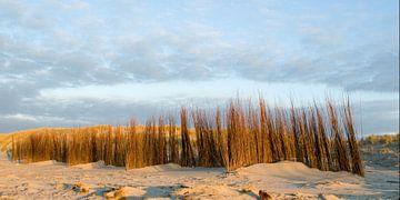 Duinwering Noordzeestrand van Margo Schoote