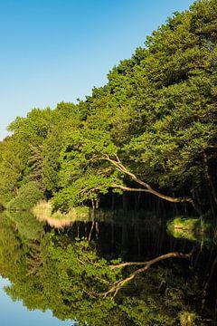 Bäume am Prerowstrom in Prerow von Rico Ködder