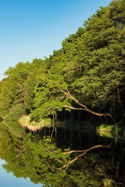 Trees on a lake in Prerow van Rico Ködder
