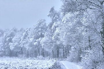 bospad met sneeuw beschenen van Alfred Stenekes
