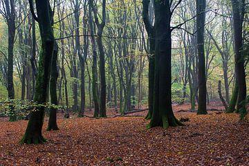Der Wald der tanzenden Bäume von DuFrank Images