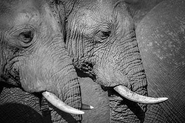 Elefantensymmetrie von Krijn van der Giessen
