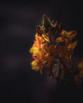 Exotic orange flower van Sandra Hazes