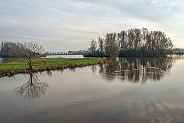 Kahle Baumsilhouetten spiegeln sich im Wasser von Ruud Morijn