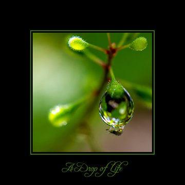 A Drop of Life. Een druppel in het groen aan het blad waar een klein insect onder hangt