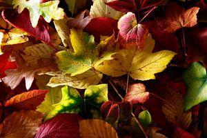 herfstbladeren van Jürgen Wiesler